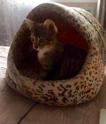 Милый котёнок в ласковые ручки, с добрым сердцем в г. Нальчик Фото 4