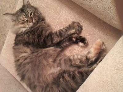 Отдам даром Кошка Маша ищет дом
