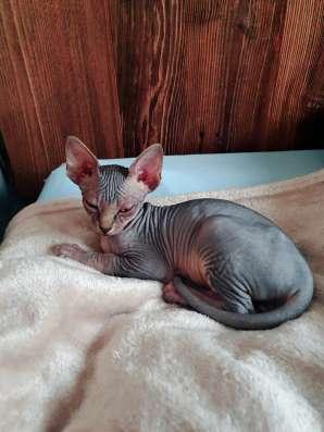 Ich verkaufe ein Kätzchen. Wenn Sie Interesse haben, schrei