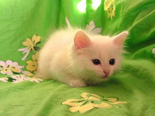 Белый котёнок ждёт хозяина. Возможна доставка. в Москве Фото 1