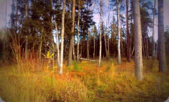 Большие, хвойные деревья. 14 соток. Газ центральный. 1 км от города Звенигород. в Москве Фото 2