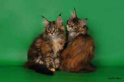 Кошки и котята в Москве Фото 2