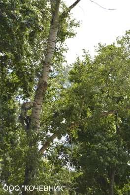 Удаление деревьев, вырубка сухостоя и аварийных деревьев