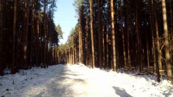 Земельные участки с лесом