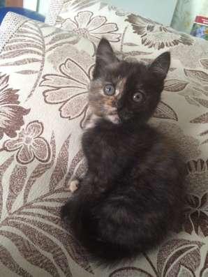 Отдам котёнка в Омске Фото 1