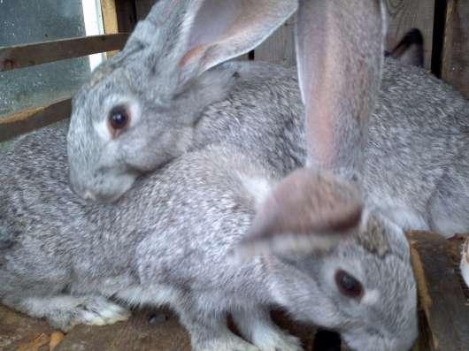 Крольчата мясной породы в Нижнем Тагиле Фото 1