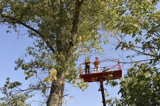 Спил, валка деревьев любой сложности в Белгороде Фото 5