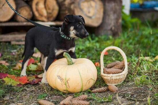 Достойная собака для достойного человека в Сергиевом Посаде Фото 1