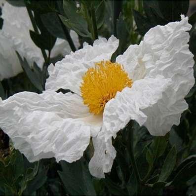 редкие  и экзотические растения для сада