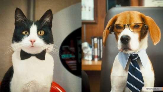Гостиница для собак и кошек