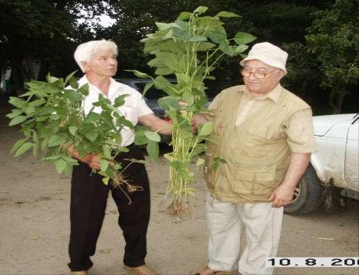 регулятор роста растений СИЛК в Красноярске Фото 4