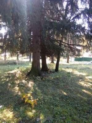30 соток в лесу новая Москва д.Сатино-Русское Фото 3