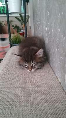Котята в Магнитогорске Фото 2
