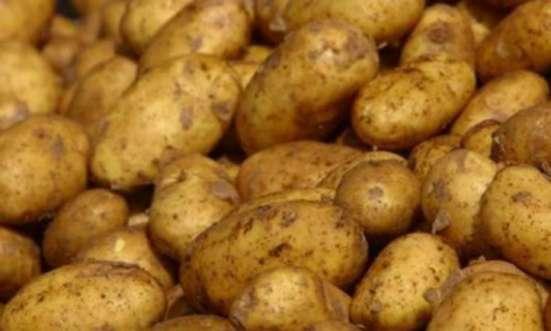 Продам деревенский картофель в Волоколамске Фото 1