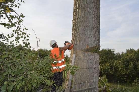 Спиливание деревьев