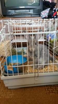 Кролик (2мес) + клетка в Новосибирске Фото 5