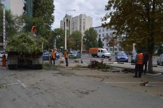 Рубим аварийные деревья в Вашем районе
