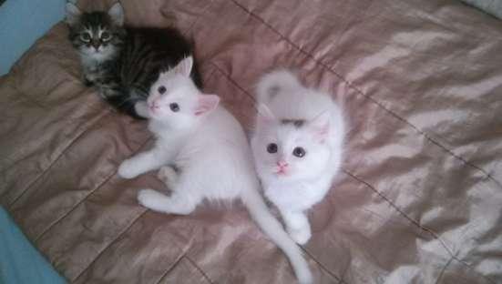 Котята в Магнитогорске Фото 4