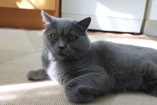 Красивый опытный британец развяжет кошку!!!