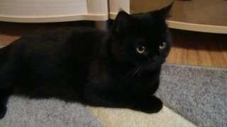 котята в Смоленске Фото 1