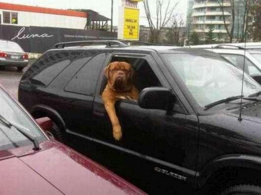 Зоо Такси Собачья Дача
