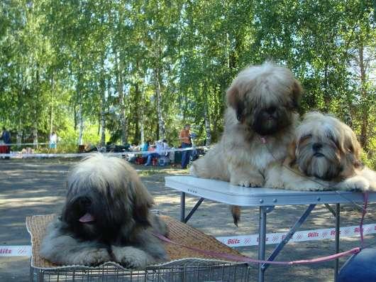 VIP щенки Лхаса Апсо в Москве Фото 1