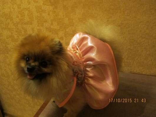 одежда для собак в Александрове Фото 1