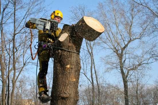 удаление аварийных деревьев в домодедово Фото 2