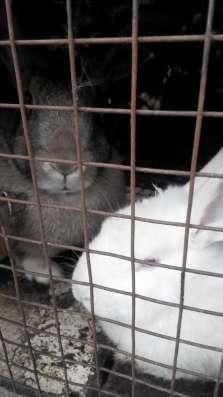 Кролики мясных пород в Омске Фото 1