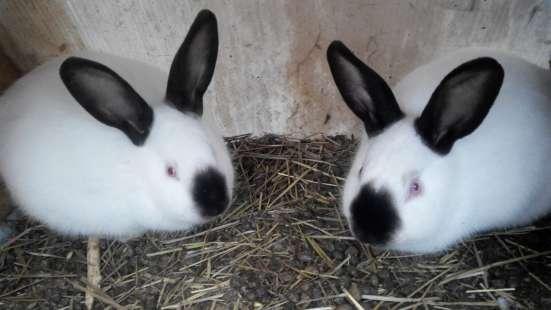 Кролики мясных пород в Омске Фото 3