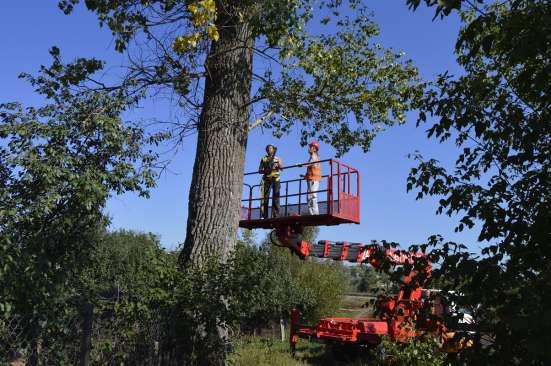 Спил, валка деревьев любой сложности в Белгороде Фото 3