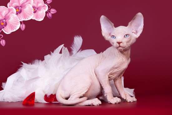 Гуманоид? Котёнок сфинкс!