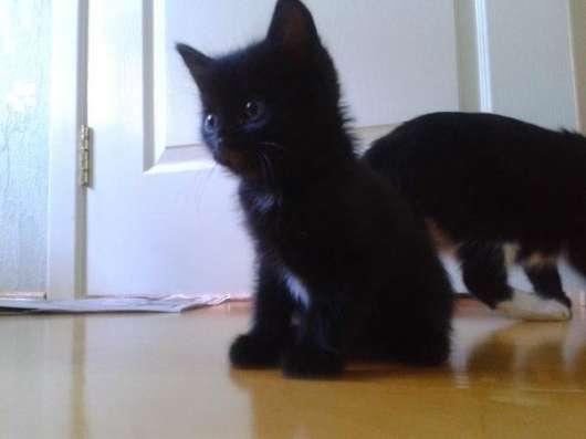 Симпатичные котята в Уфе Фото 3