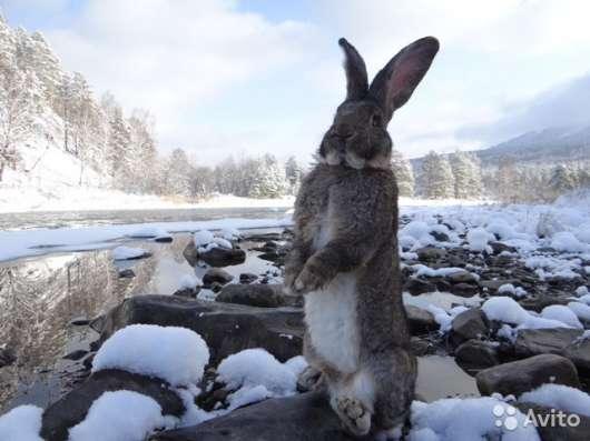 парное мясо кролика