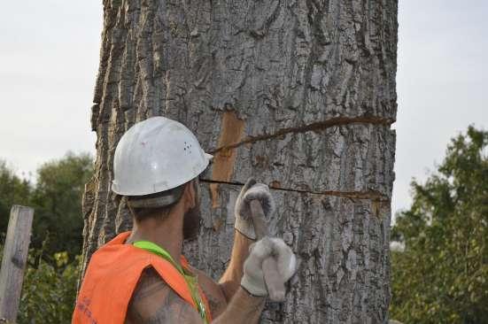 Спил деревьев, выкорчевка пней
