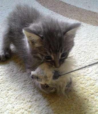 Очаровательный котенок в любящие заботливые руки!