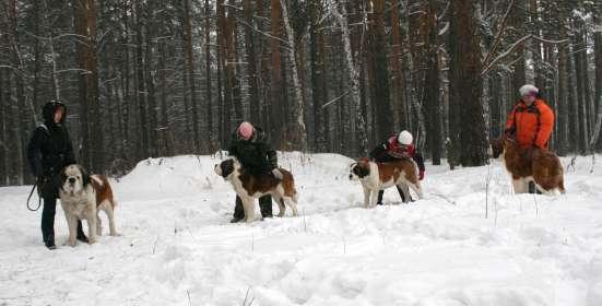 Дрессировка собак, корректировка поведения. в Новосибирске Фото 1