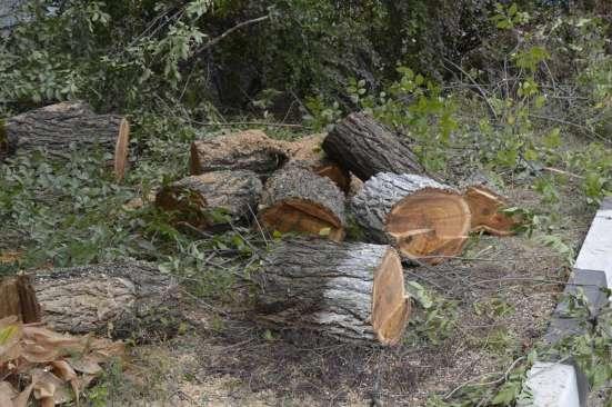 Спил, кронирование, валка деревьев в Белгороде Фото 3
