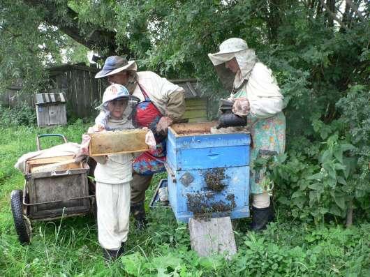 Продам мёд