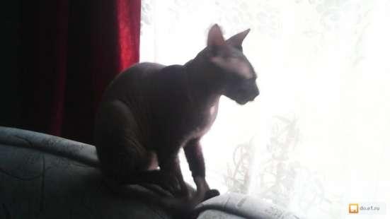 Отдам котят! в Екатеринбурге Фото 3