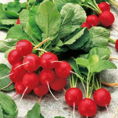 Семена овощей весовые, пакетированные оптом в г. Полоцк Фото 1
