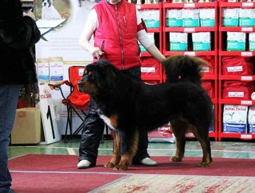 Дрессировка собак, корректировка поведения. в Новосибирске Фото 4