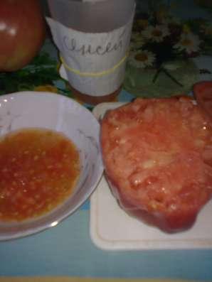 Продаю семена томатов для ОГ и теплиц, более 100 сортов! в Коломне Фото 1