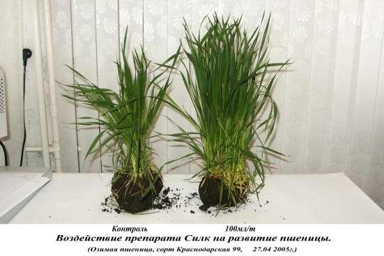 регулятор роста растений СИЛК в Красноярске Фото 5
