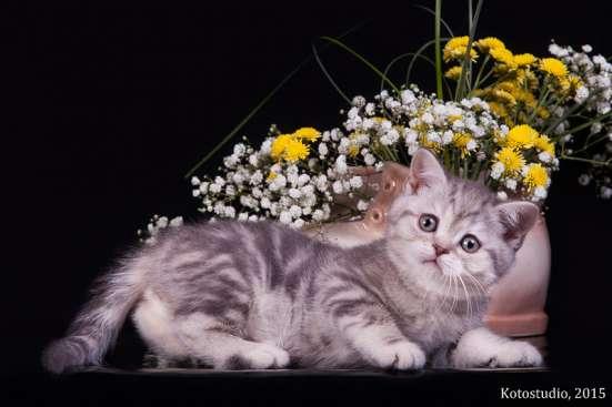 Шикарный кот в племенную работу!