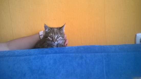 Котята-дачники в Казани Фото 1