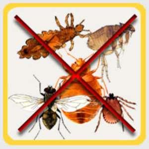 Уничтожить избавится вывести убить клопов блох муравьи тарак