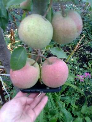 Саженцы плодовых и декоративных растений