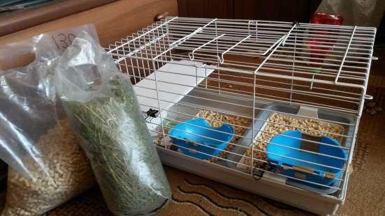 Кролик (2мес) + клетка в Новосибирске Фото 1