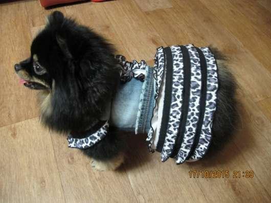 одежда для собак в Александрове Фото 4